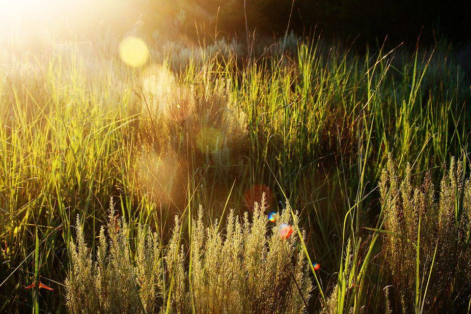 Prairie grasses near the Selman bat cave. Photo by Nathan Gunter