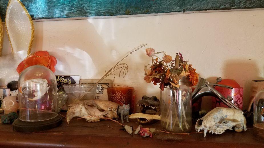 Assorted skulls and bones