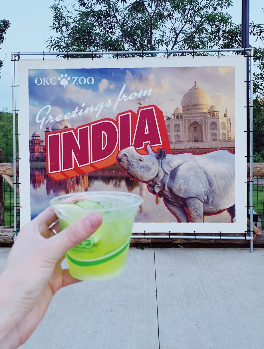 Drink a Chubby Green Unicorn (a cucumber melon cocktail) while learning about one of the Oklahoma City Zoo's conservation partners, International Rhino Foundation, and the work they are doing to protect wild rhino populations in Asia and Africa during Sip & Stroll. Photo by Oklahoma City Zoo