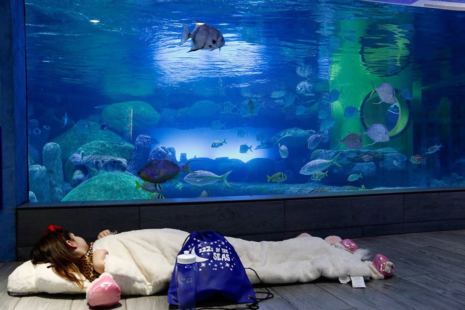 Snooze with the sharks during ZZZs in the Seas at the Oklahoma Aquarium in Jenks. Photo by Laura Long/Oklahoma Aquarium.