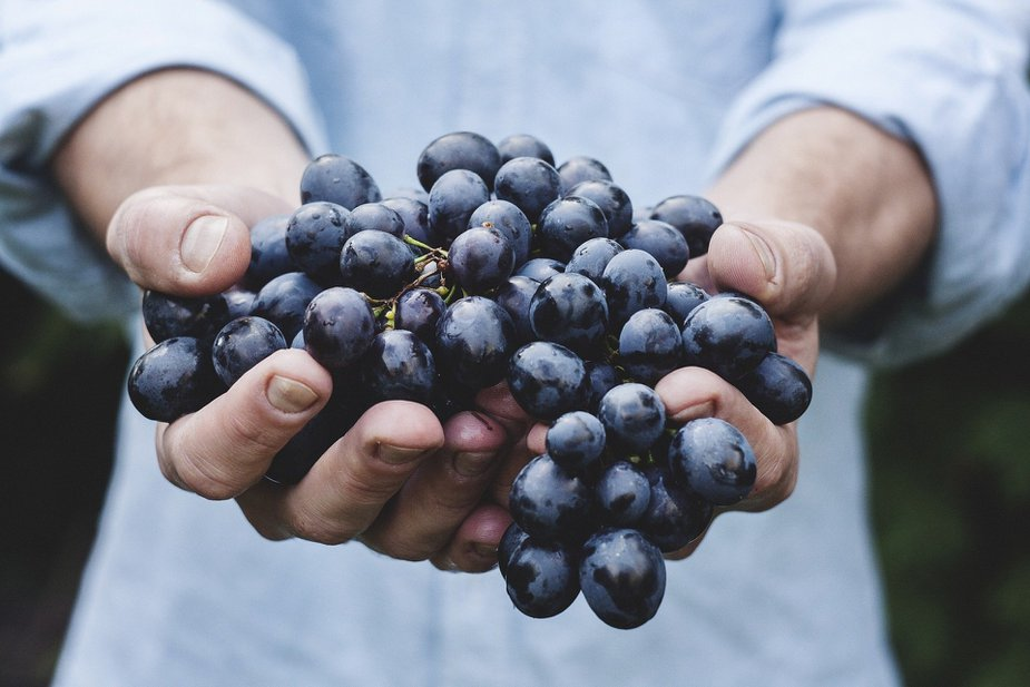 Head to Lexington if you'd like to get your hands (and feet) on some grapes.
