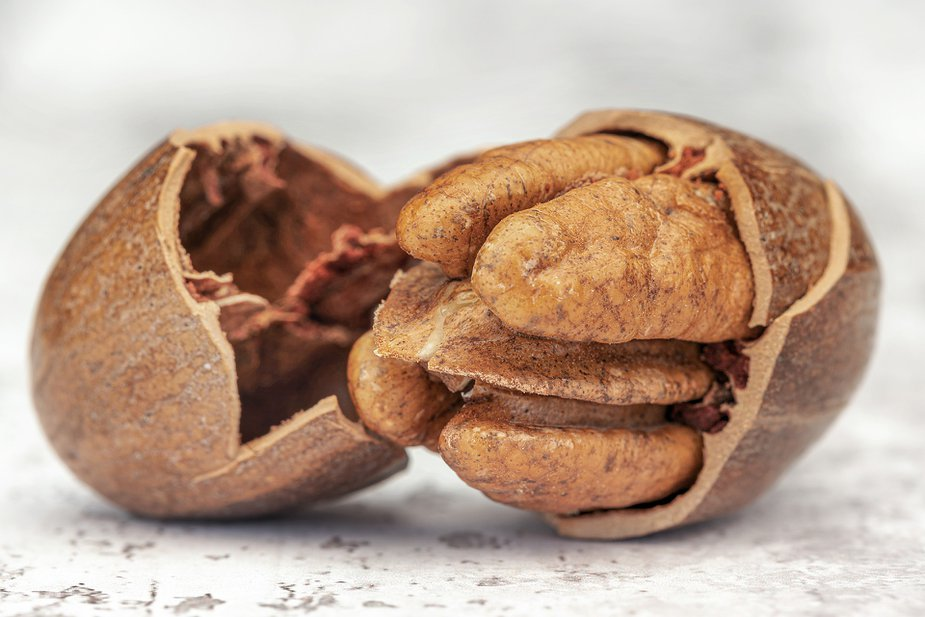 However you pronounce it, Okmulgee's Pecan Festival is a delicious way to enjoy the city. Photo by Jackie Matthews