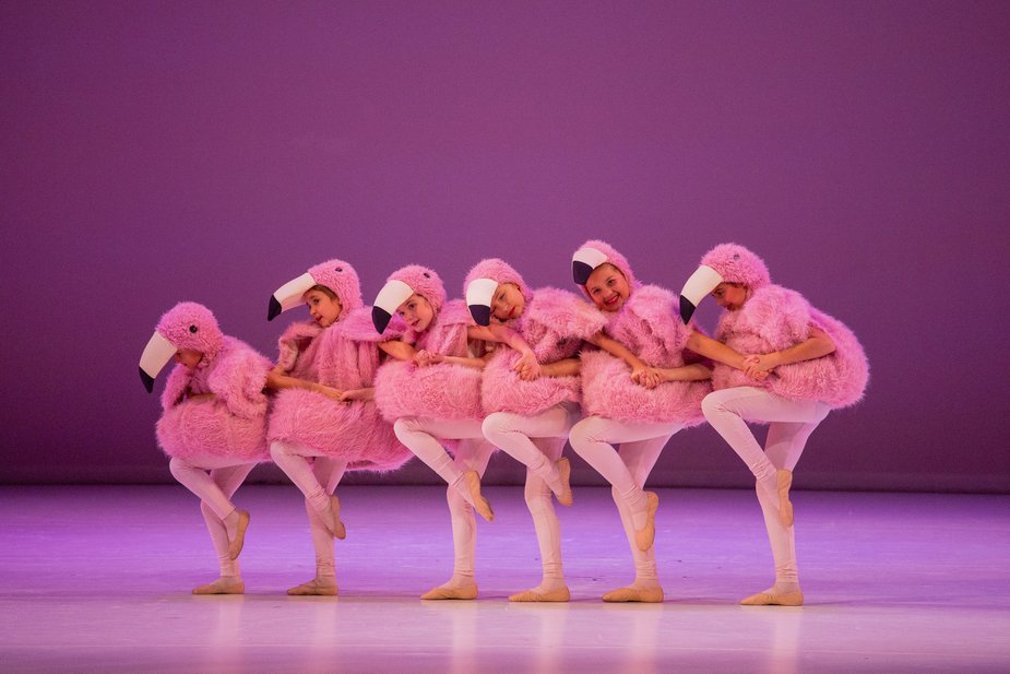 A flock of young flamingoes files across the Civic Center stage. Photo by Jana Carson