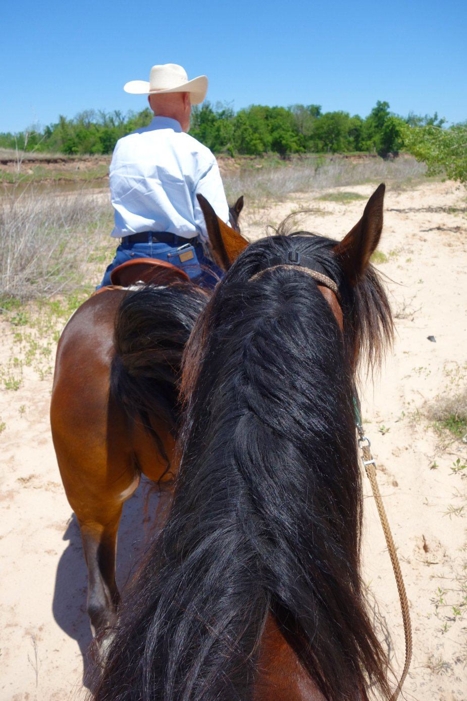 A view from a trail ride at Honey Lee Ranch. Photo by Megan Rossman
